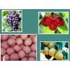 ShanDong Specials Fruits and Vegetable